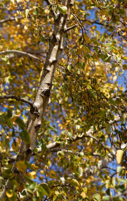 Autumnleaves2012-3721