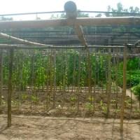 2012鄉下老家_爸爸菜園1
