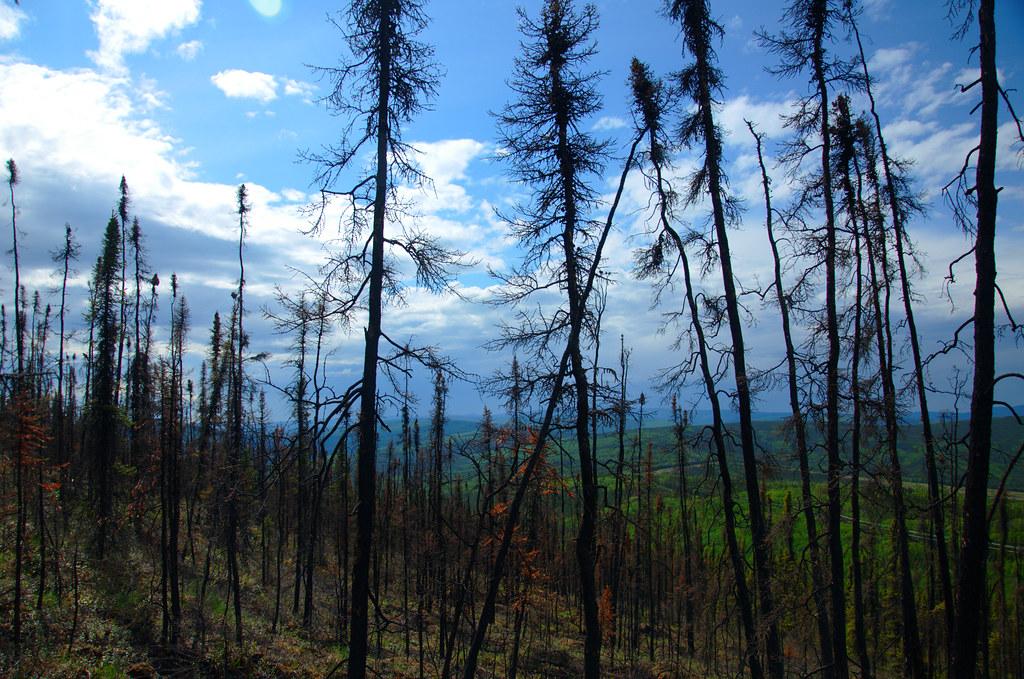 Fire landscape