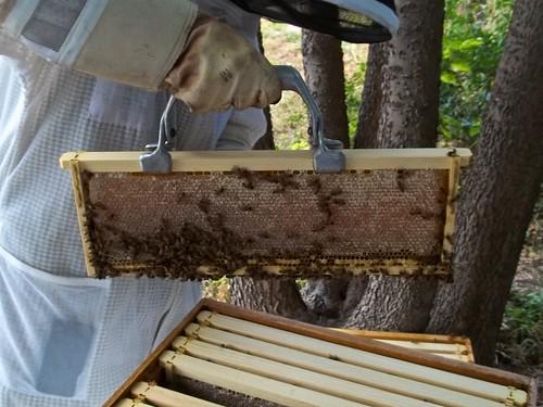 Rosemary Honey Frame