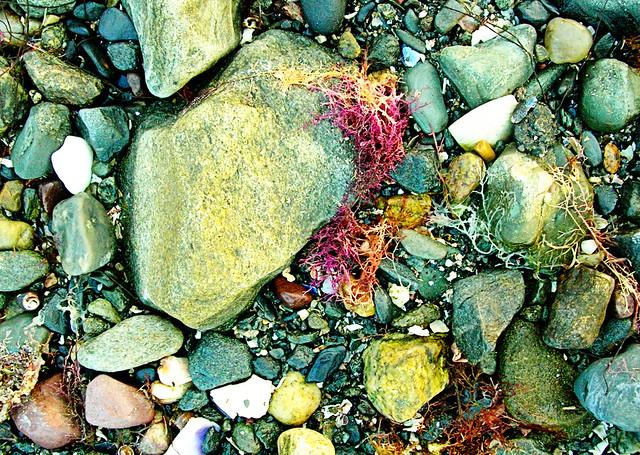seaweed on the shore