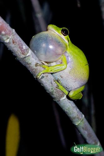 Tree Frog-1010008