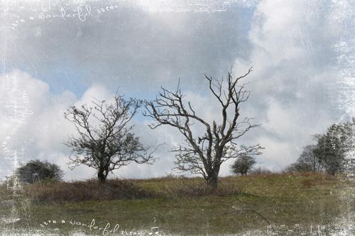 TT-tree-conversation1-w