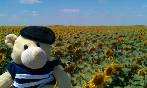 Oooh big yellow flowers
