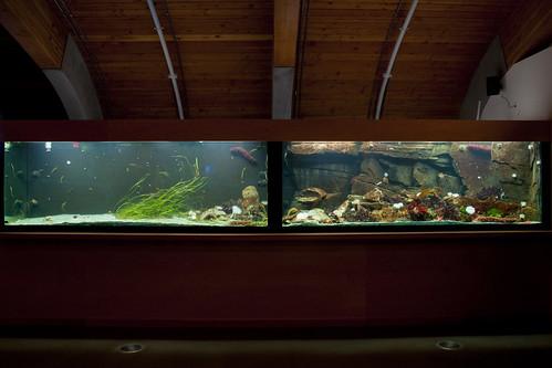 Display Aquaria 120714-4