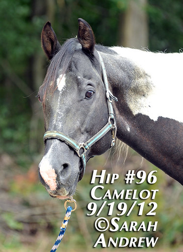 Hip #96