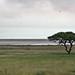 Etosha National Park impressions, Namibia - IMG_3522_CR2_v1