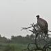 Etosha National Park impressions, Namibia - IMG_3277_CR2_v1
