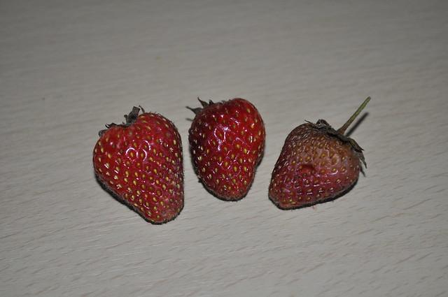 2012-09-08 Strawberries