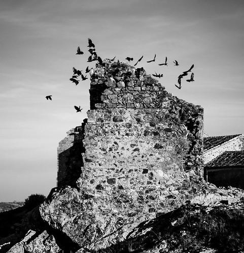 """169/365 """"La Torre de la Bandada"""" by Flickr Jiménez (Pedro Nog)"""