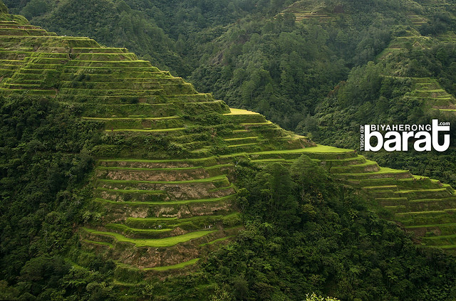 Banaue Rice Terraces stiarway to heaven
