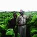 Farmer Paradza and employee / Credit: Stanley Kwenda/IPS
