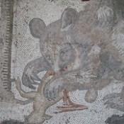 A mouse-like bear with its kill