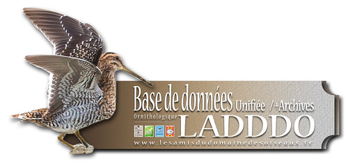 bandeau-base de donnees-LADDDO Ver1A