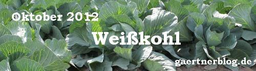 Garten-Koch-Event Oktober 2012: Weißkohl [31.10.2012]