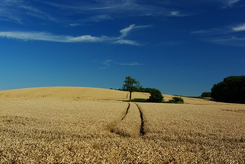 20120908-06_Warwickshire Farmland - Wheat Field - Far Focus by gary.hadden
