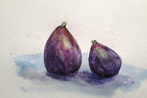 Fig Sketchbook Study