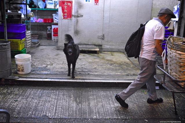 Black dog guarding