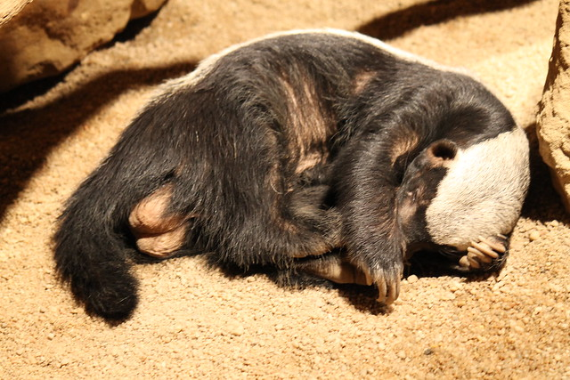 Project 52 2012 #35: Honey Badger has no regard for other animals watching its balls...