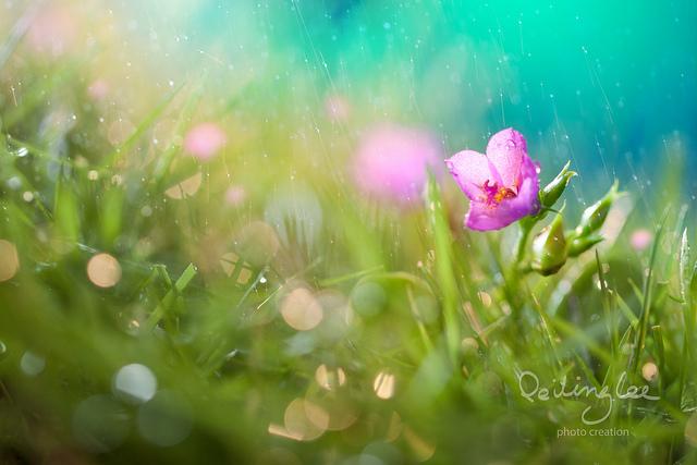 amazing macro photography by Lee Peiling