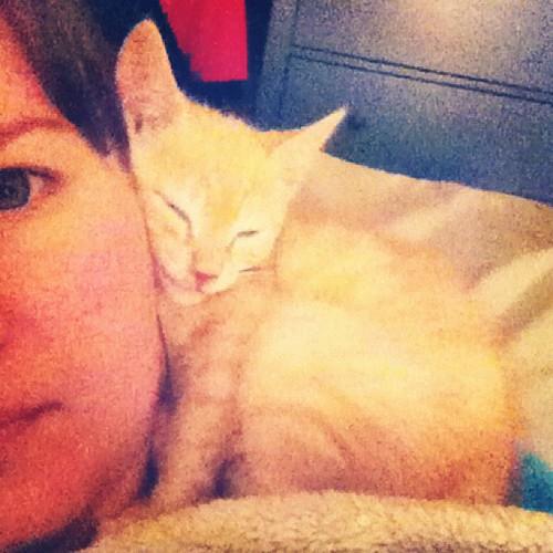 cute sleepy kitty baby