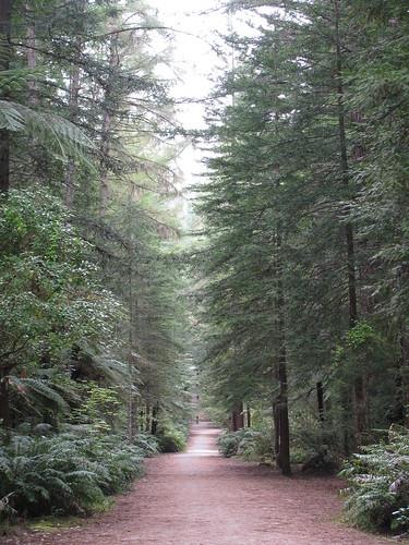 Rotorua Redwoods by holidaypointau