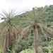 Democratic Republic of Congo impressions - IMG_2782_CR2_v1