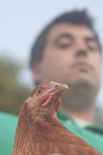 chickenherding-26