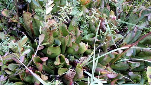 MUN Botanical Garden 11
