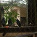 Yaounde impressions, Cameroon - IMG_2478_CR2_v1