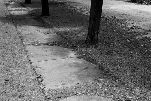 leaves on the sidewalk, in the street