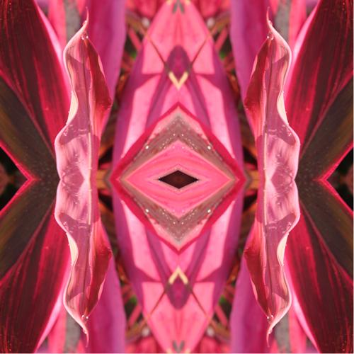 dracaena-kaleidoscope1-w