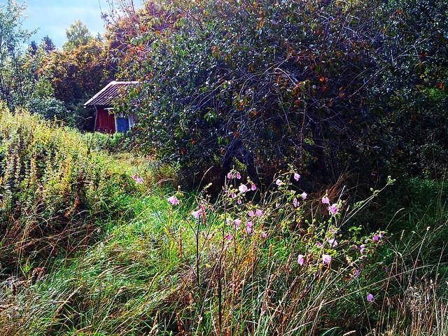 Viking Land Fairy Tale - 3