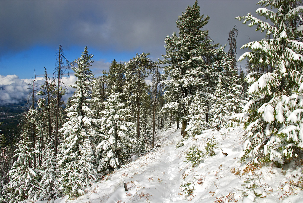 Trail 340 in the Baldy Mountain roadless area
