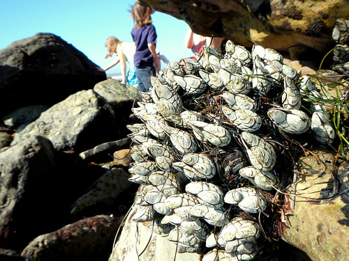 a bouquet of...  mussels?