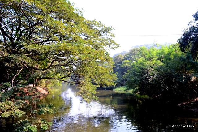 Dahisar River, flowing through Borivili National Par, Mumbai, December 2011