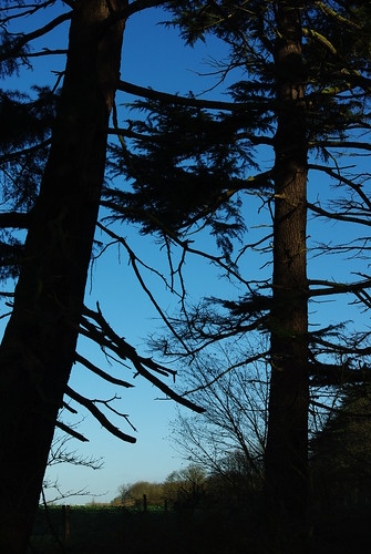 20120102-08_Coombe Abbey_Perimeter Trees in Silhouette by gary.hadden