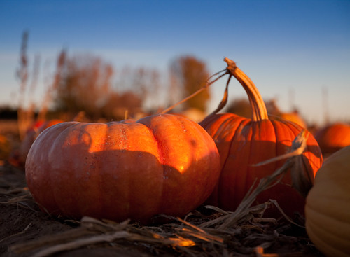 Pumpkin Patch Trip for All Hallows' Evening by Corbin Elliott Photography