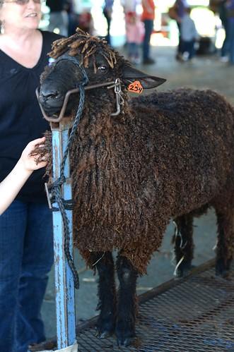 Oct20-Sheep4