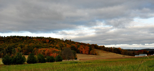Perry County foliage