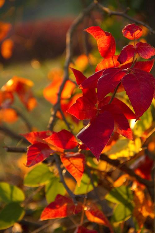 Glowing Autumn Sunset