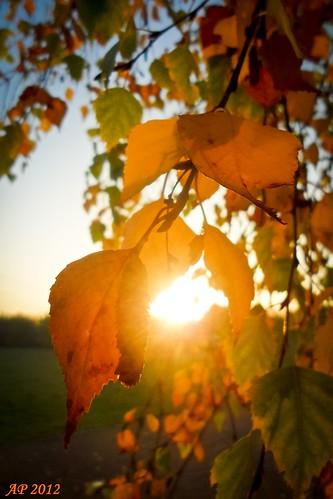 Soleil d'automne / Autumn Sun