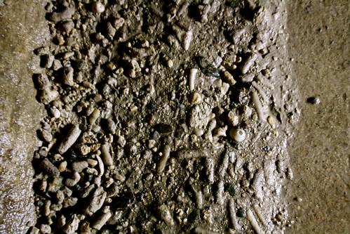 Coral in Ishigaki Limestone Cave?