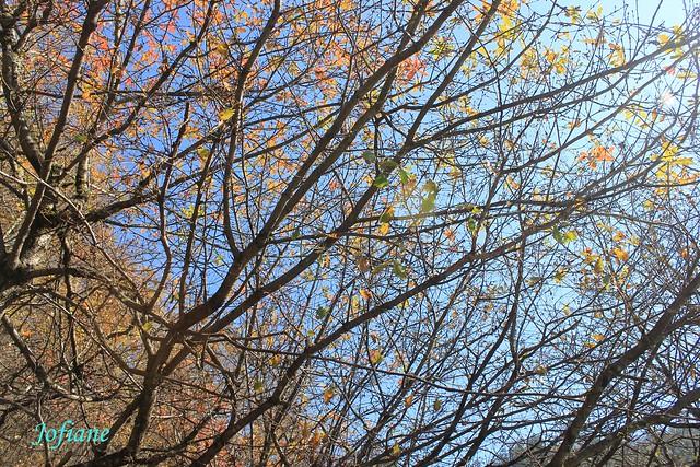 Jofiane - autumn tree