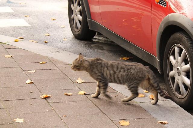 Runaway Cat