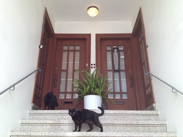 Black cats, Jersey Street