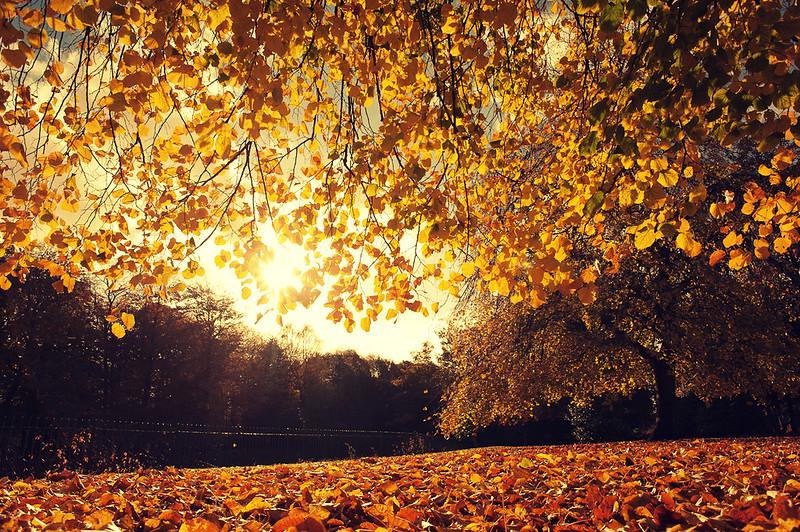 ++ Chasing Autumn ++