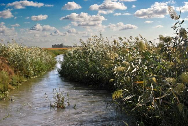 Un canal de riego en un arrozal de La Puebla del Río, Sevilla