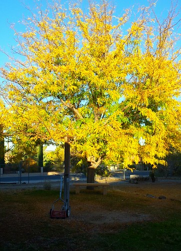 Fall tree with mower by J*Phillips
