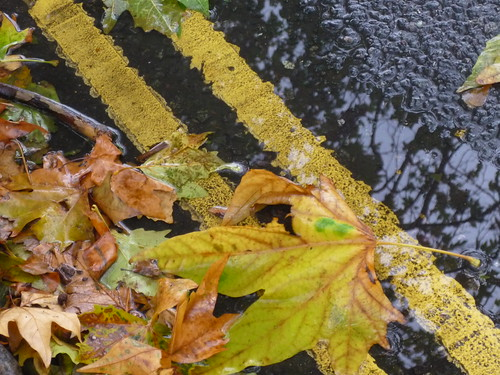 gascoyne road e9, gutter, yellow lines, leaves, 2012-11-04, 13-23-07